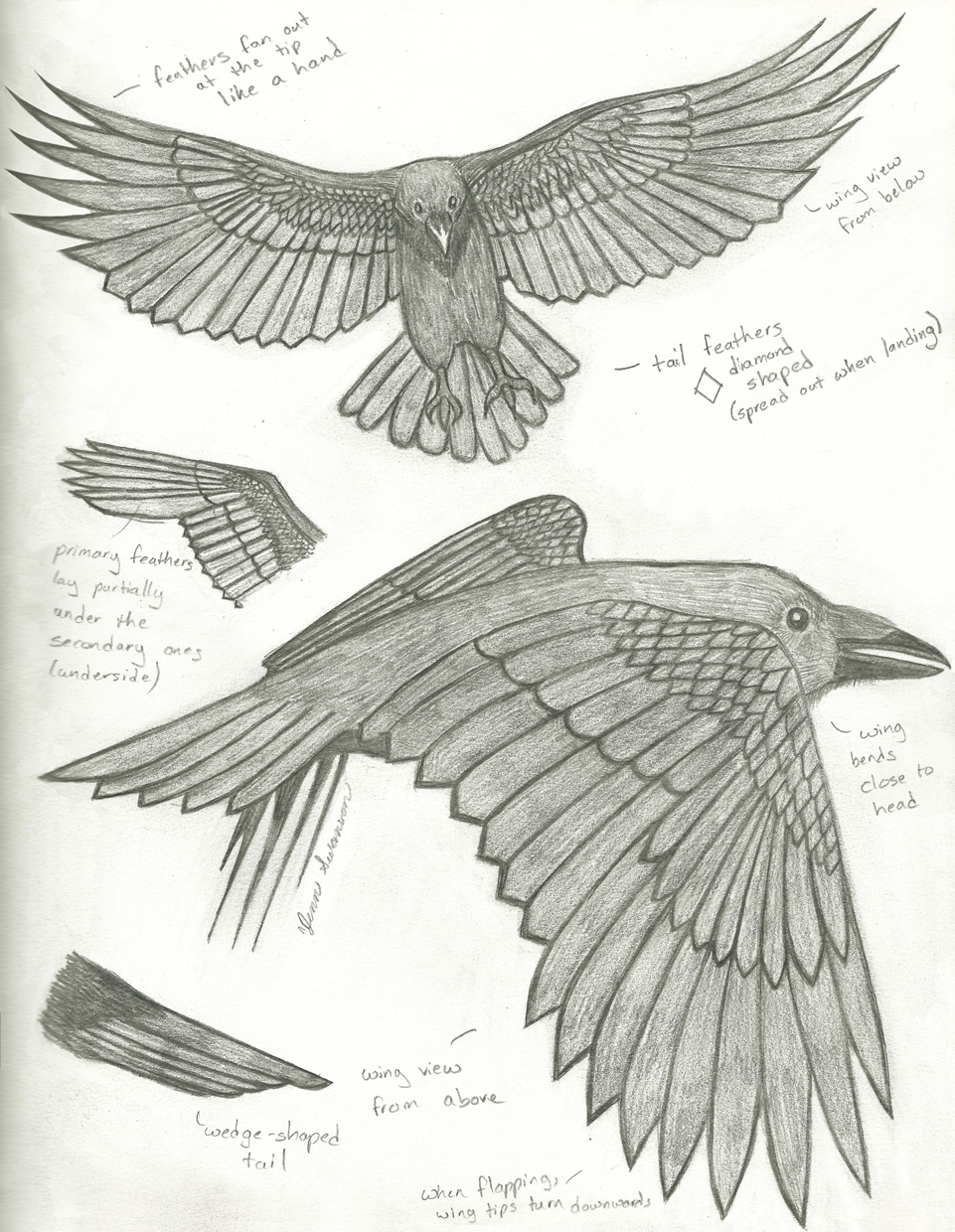 ravenStudy2_small